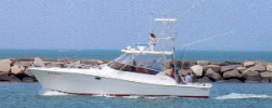Blue Water Sport Fishing Charters - Montauk, New York - Long Island Sport Fishing