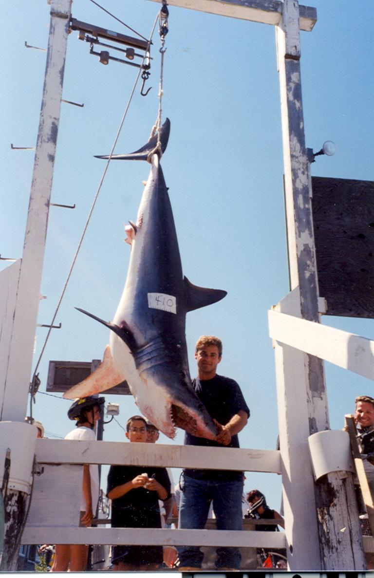 Fishing for shark blue water sport fishing charters for Fishing boats long island